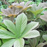 L-R Perennials